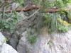 La Grotta di Roccia San Sebastiano